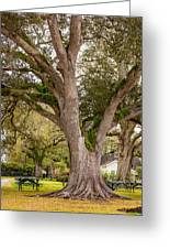 Oak Alley Backyard Greeting Card