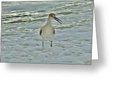 Ocean Bird Greeting Card