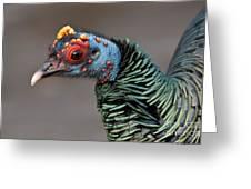 Ocellated Turkey Portrait Greeting Card