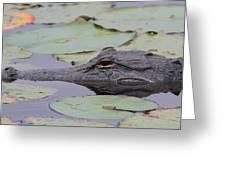 Okefenokee Gator Greeting Card