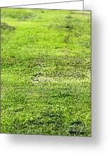 Old Green Grass Greeting Card
