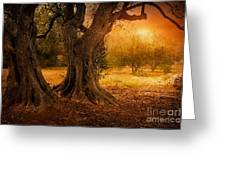 Old Olive Tree Greeting Card