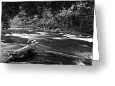 Going Down Stream Greeting Card
