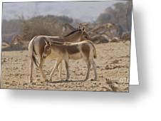 Onager Equus Hemionus 1 Greeting Card