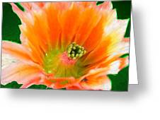 Orange Cactus Flower Greeting Card