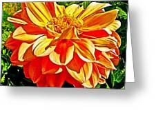 Orange Dahlia On Taquille Island In Lake Titicaca-peru  Greeting Card