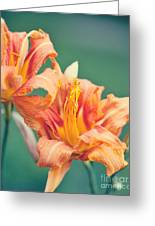 Orange Double Daylily Greeting Card