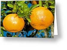Orange Fruit Growing On Tree Greeting Card
