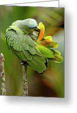 Orange-winged Parrot Amazona Amazonica Greeting Card