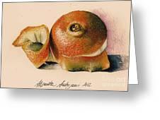 Orange..navel Greeting Card