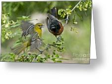 Orchard Orioles Greeting Card