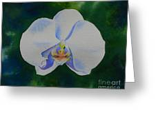 Orchid Dance 2 Greeting Card
