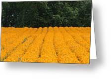 Oregon Orange Field Panoramic Greeting Card