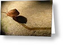 Oregon Snail Greeting Card