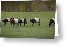 Oreo Cows Greeting Card
