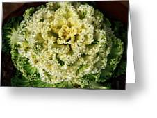 Ornamental Cabbage Plant Greeting Card