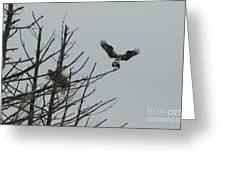 Osprey Love Greeting Card