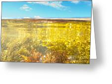 Over-under Split Shot Of Clear Water In Tidal Pool Greeting Card