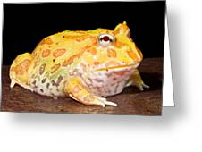 Pac Man Frog Ceratophrys Greeting Card