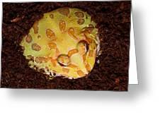 Pac Man Frog Greeting Card