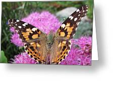 Painted Lady Butterfly Up Close Greeting Card