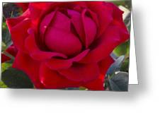 Painting Of A Rose Greeting Card