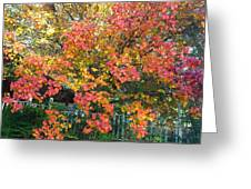 Pallette Of Fall Colors Greeting Card