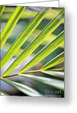 Palm Leaves Pattern Greeting Card