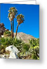 Palm Oasis On Borrego Palm Canyon Trail In Anza-borrego Desert Sp-ca Greeting Card
