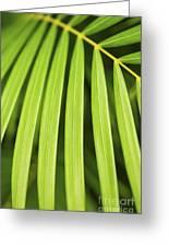 Palm Tree Leaf Greeting Card by Elena Elisseeva