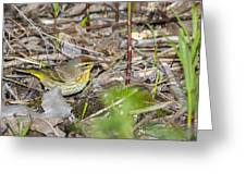 Palm Warbler Greeting Card