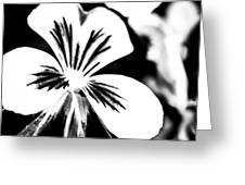 Pansy Flower Black And White 01 Greeting Card