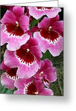 Pansy Orchid 1 Greeting Card