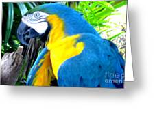 Blue Yellow Macaw. Parrot. Photo Of Bird Greeting Card