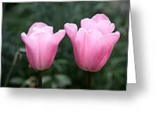 Parrot Tulip Mystic Mistress  Greeting Card