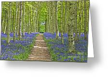Path Through Bluebells Resembling Water Colour Greeting Card