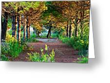 Pathway Through Colorful Forest In Fall Autumn Greeting Card