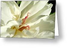 Peaceful Sentinel Of The White Peony Greeting Card