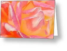 Peachy Pink Rose Greeting Card