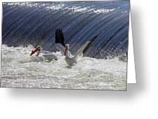 Pelican Drama Greeting Card