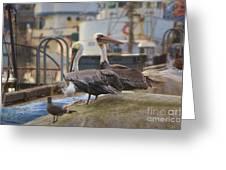 Pelican Duo Greeting Card