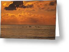 Pelican Sunrise Greeting Card