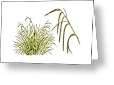 Pendulous Sedge (carex Pendula) Greeting Card
