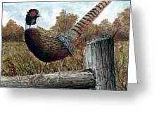 Pheasant On Fence Greeting Card