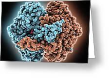 Phosphoglucose Isomerase Molecule Greeting Card