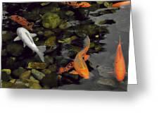 Swimming Koi Greeting Card