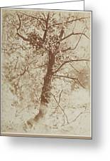 Photograph Of A Tree Greeting Card
