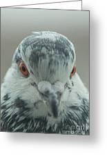 Pigeon Close-up Greeting Card