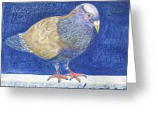 Pigeon On Snowy Wall Greeting Card