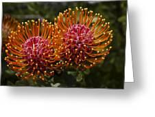 Pincushion Flowers Greeting Card